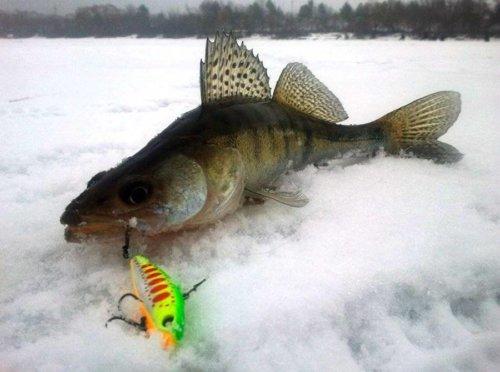 Ловля хищных рыб зимой