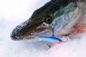 Рыбалка зимой на балансир и блесну