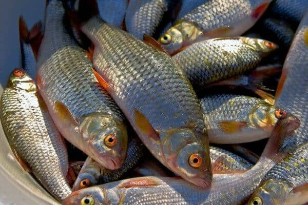 Рыбалка в апреле на плотву