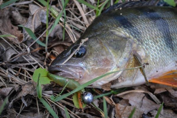 Рыбалка на окуня в апреле