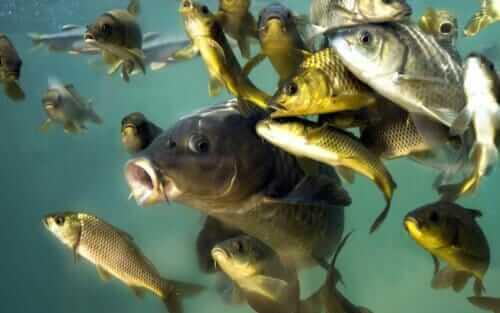 Секрет успешной рыбалки