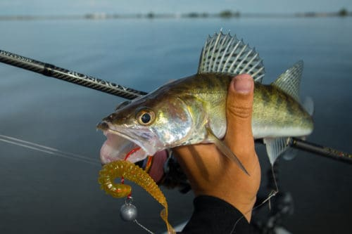 Рыбалка на судака летом