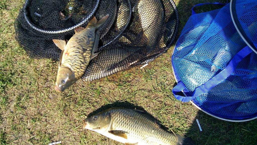 Правила рыболовства в водоёмах Пензенской области