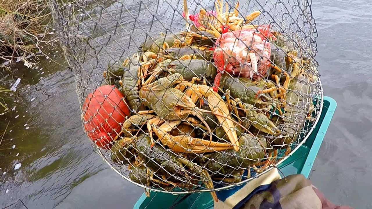 Ловля раков правила рыболовства