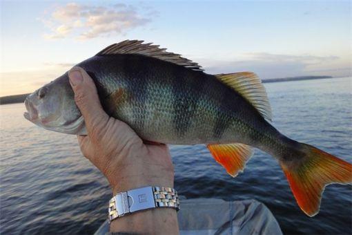 Рыбы московской области