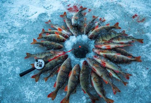 Зимняя рыбалка на окуня: оснастка, прикорм