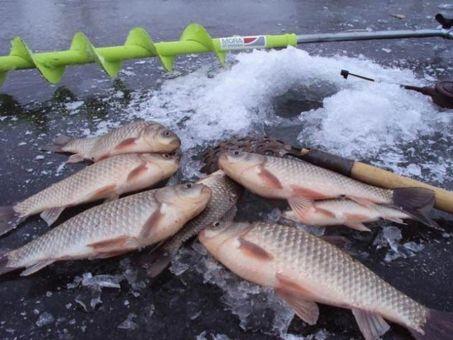 карась на льду