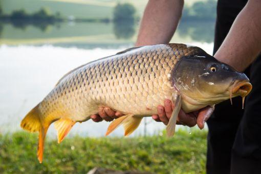 Факты, помогут улучшить ваши действия на рыбалке
