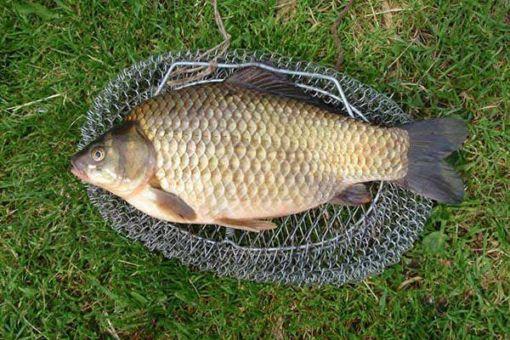 Повадки и предпочтения древней рыбы