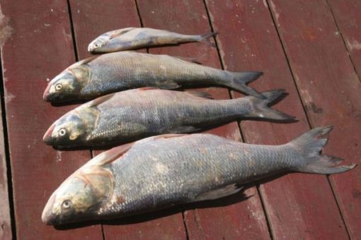 Рекомендации рыбакам