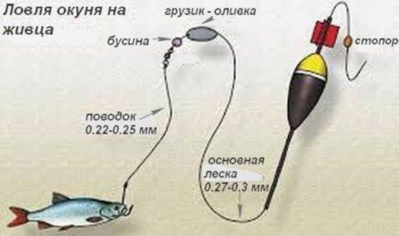 Ловля окуня на удочку: места ловли, секреты рыбаков
