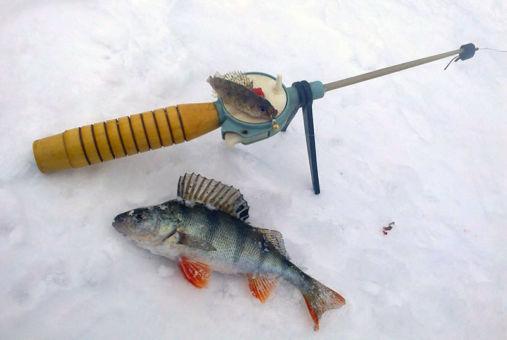 Безмотылка на окуня - техника ловли крупной рыбы