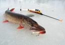 Ловля щуки на балансир зимой: выбор места и особенности рыбалки